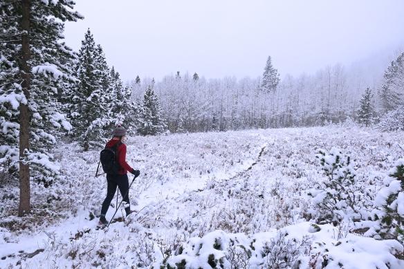 snowywalk