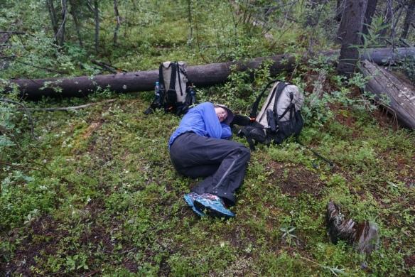 Underbrush In Owen Park Is So Dense Its >> Wilderness Alta Backcountry
